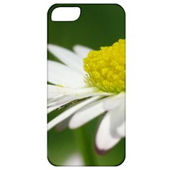 Daisy With Drops Apple Iphone 5 Classic Hardshell Case by Siebenhuehner