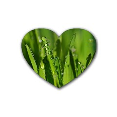 Grass Drops Drink Coasters (heart) by Siebenhuehner