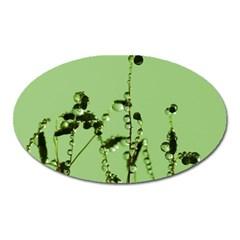 Mint Drops  Magnet (oval) by Siebenhuehner