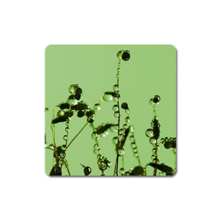 Mint Drops  Magnet (Square)