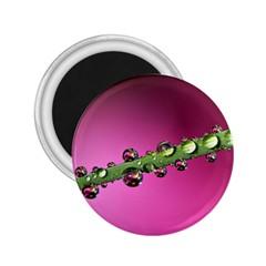 Drops 2 25  Button Magnet by Siebenhuehner