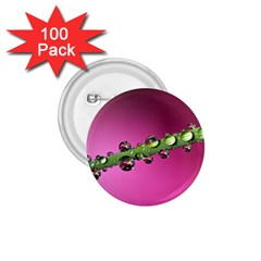 Drops 1 75  Button (100 Pack) by Siebenhuehner