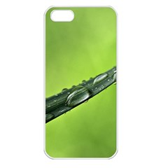 Green Drops Apple Iphone 5 Seamless Case (white) by Siebenhuehner