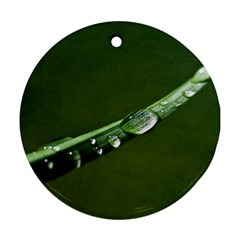 Grass Drops Round Ornament (two Sides) by Siebenhuehner