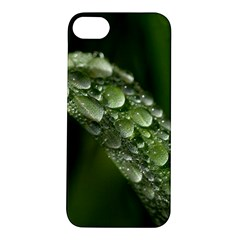 Grass Drops Apple Iphone 5s Hardshell Case by Siebenhuehner