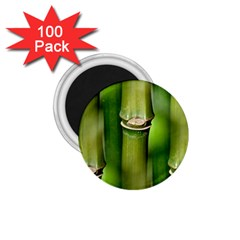 Bamboo 1 75  Button Magnet (100 Pack) by Siebenhuehner
