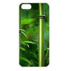 Bamboo Apple Iphone 5 Seamless Case (white) by Siebenhuehner