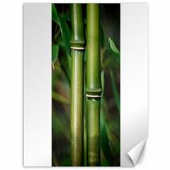 Bamboo Canvas 36  X 48  (unframed) by Siebenhuehner