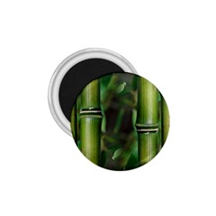 Bamboo 1 75  Button Magnet by Siebenhuehner