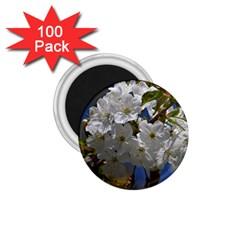 Cherry Blossom 1 75  Button Magnet (100 Pack) by Siebenhuehner