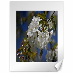 Cherry Blossom Canvas 36  X 48  (unframed)