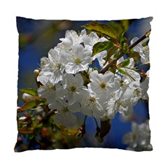 Cherry Blossom Cushion Case (single Sided)  by Siebenhuehner