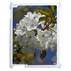 Cherry Blossom Apple Ipad 2 Case (white) by Siebenhuehner
