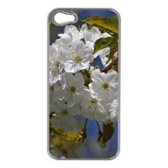 Cherry Blossom Apple Iphone 5 Case (silver) by Siebenhuehner