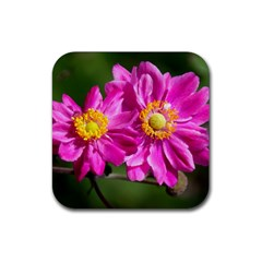 Flower Drink Coasters 4 Pack (square) by Siebenhuehner