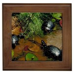 Baby Turtles Framed Tile