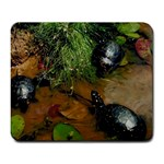 Baby Turtles Large Mousepad