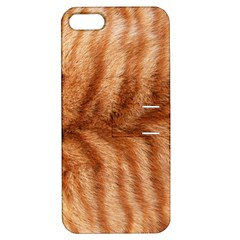 Cat Coat 1 Apple Iphone 5 Hardshell Case With Stand by BrilliantArtDesigns
