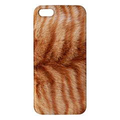 Cat Coat 1 Iphone 5s Premium Hardshell Case by BrilliantArtDesigns