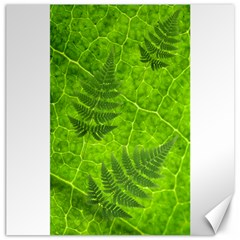 Leaf & Leaves Canvas 12  X 12  (unframed) by BrilliantArtDesigns