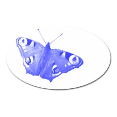 Decorative Blue Butterfly Magnet (oval) by Colorfulart23