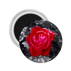 Red Rose 2 25  Button Magnet by jotodesign