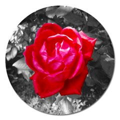 Red Rose Magnet 5  (round) by jotodesign