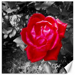 Red Rose Canvas 16  X 16  (unframed) by jotodesign