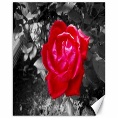 Red Rose Canvas 11  x 14  (Unframed) by jotodesign