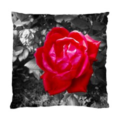 Red Rose Cushion Case (two Sided)  by jotodesign