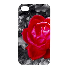 Red Rose Apple Iphone 4/4s Premium Hardshell Case by jotodesign