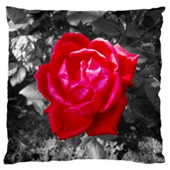 Red Rose Large Cushion Case (two Sided)  by jotodesign