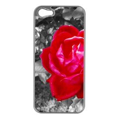 Red Rose Apple Iphone 5 Case (silver) by jotodesign