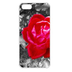 Red Rose Apple Iphone 5 Seamless Case (white) by jotodesign