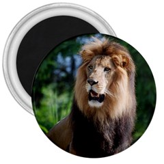 Regal Lion 3  Button Magnet by AnimalLover