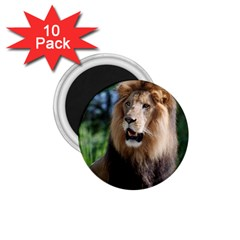 Regal Lion 1 75  Button Magnet (10 Pack) by AnimalLover
