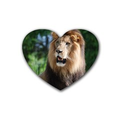 Regal Lion Drink Coasters 4 Pack (heart)  by AnimalLover
