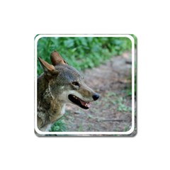 Red Wolf Magnet (square) by AnimalLover