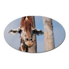 Cute Giraffe Magnet (oval) by AnimalLover