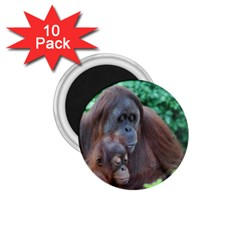 Orangutan Family 1 75  Button Magnet (10 Pack) by AnimalLover
