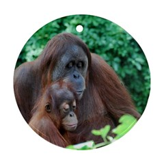 Orangutan Family Round Ornament (two Sides) by AnimalLover