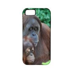 Orangutan Family Apple Iphone 5 Classic Hardshell Case (pc+silicone) by AnimalLover