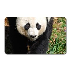 Giant Panda Magnet (Rectangular) by AnimalLover