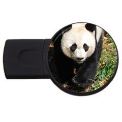 Giant Panda 2gb Usb Flash Drive (round) by AnimalLover