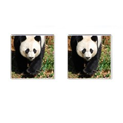 Giant Panda Cufflinks (square) by AnimalLover