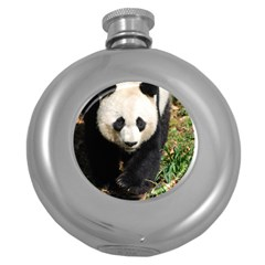 Giant Panda Hip Flask (round) by AnimalLover