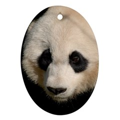 Adorable Panda Oval Ornament by AnimalLover