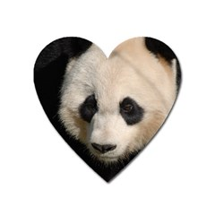 Adorable Panda Magnet (heart) by AnimalLover