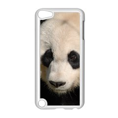 Adorable Panda Apple Ipod Touch 5 Case (white) by AnimalLover