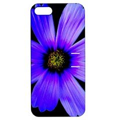 Purple Bloom Apple iPhone 5 Hardshell Case with Stand by BeachBum